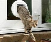 cat flap in glass